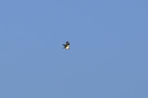 Passage Osprey