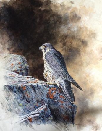 Dave Scott - Artist, South Devon