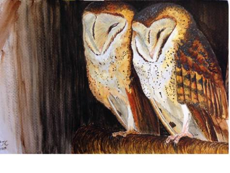 Roosting Barn Owls