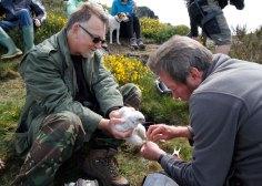 Steve and Roger applying rings